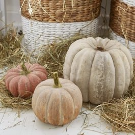 Lot de 3 citrouilles Pumpkin multicolore