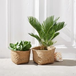 Lot de 2 cache-pots Hattingston marron
